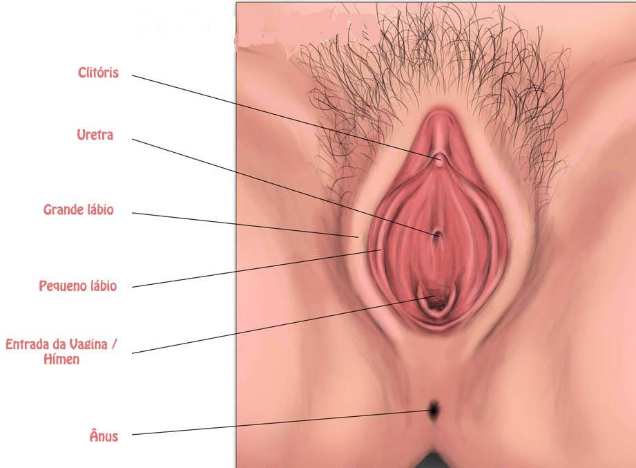 imagem de uma vulva
